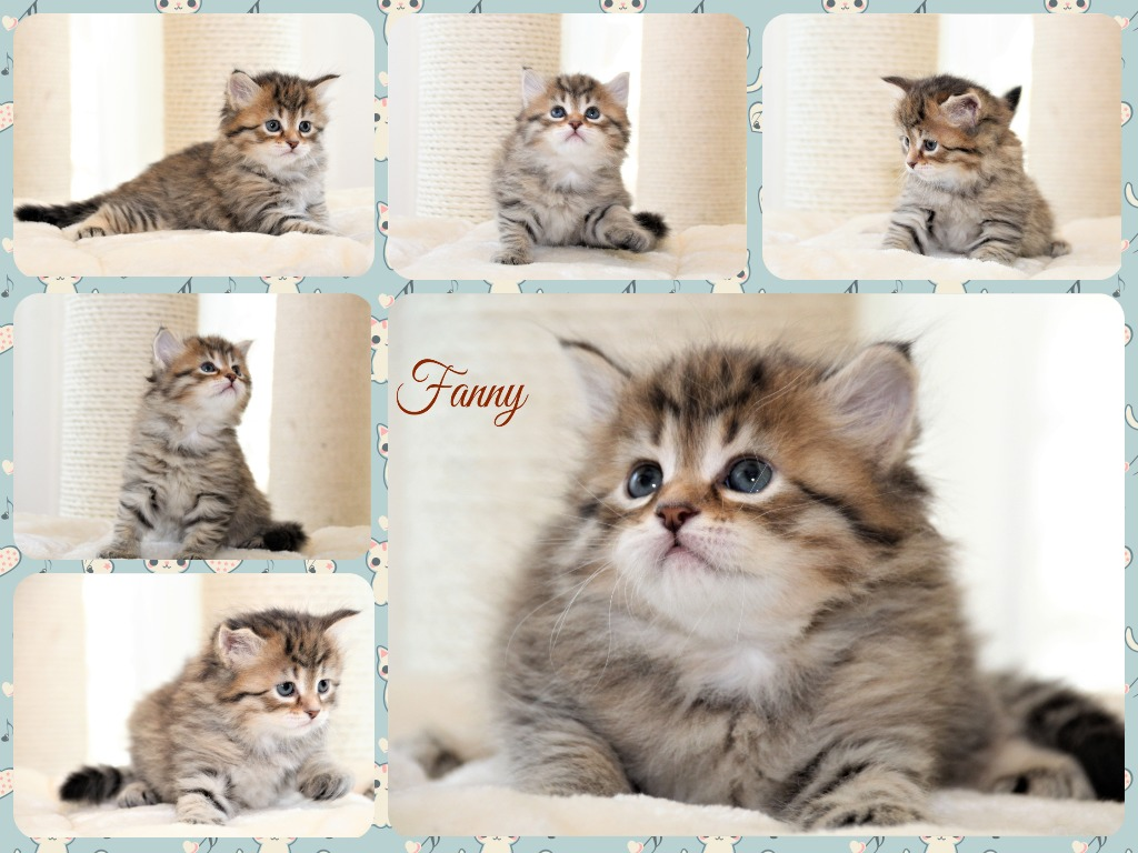 Collage Fanny