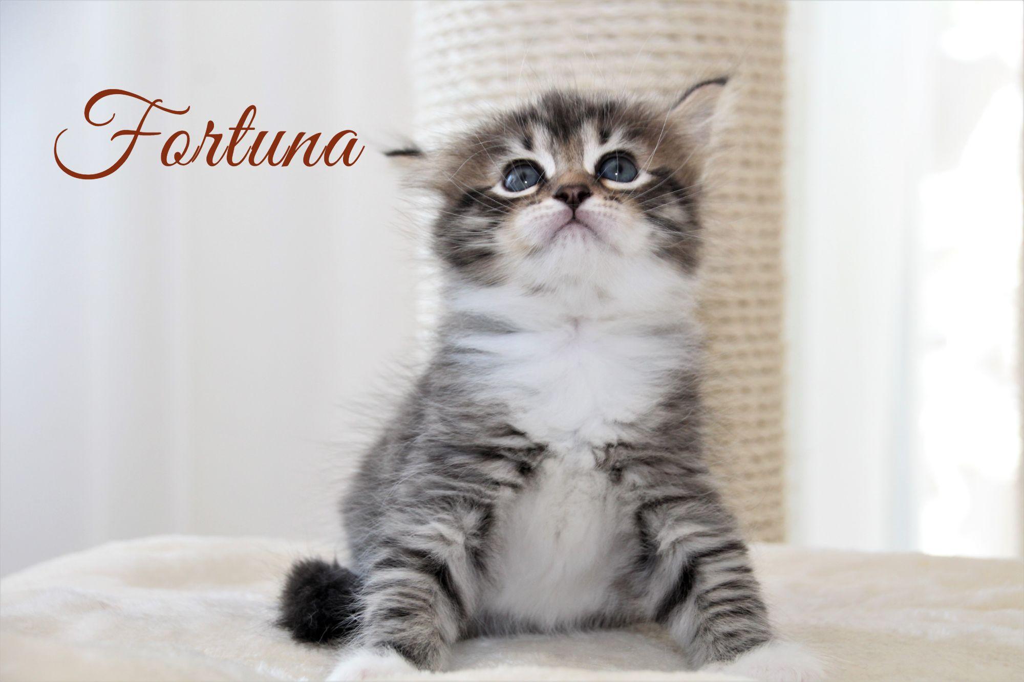 Fortuna, 1 Monat alt
