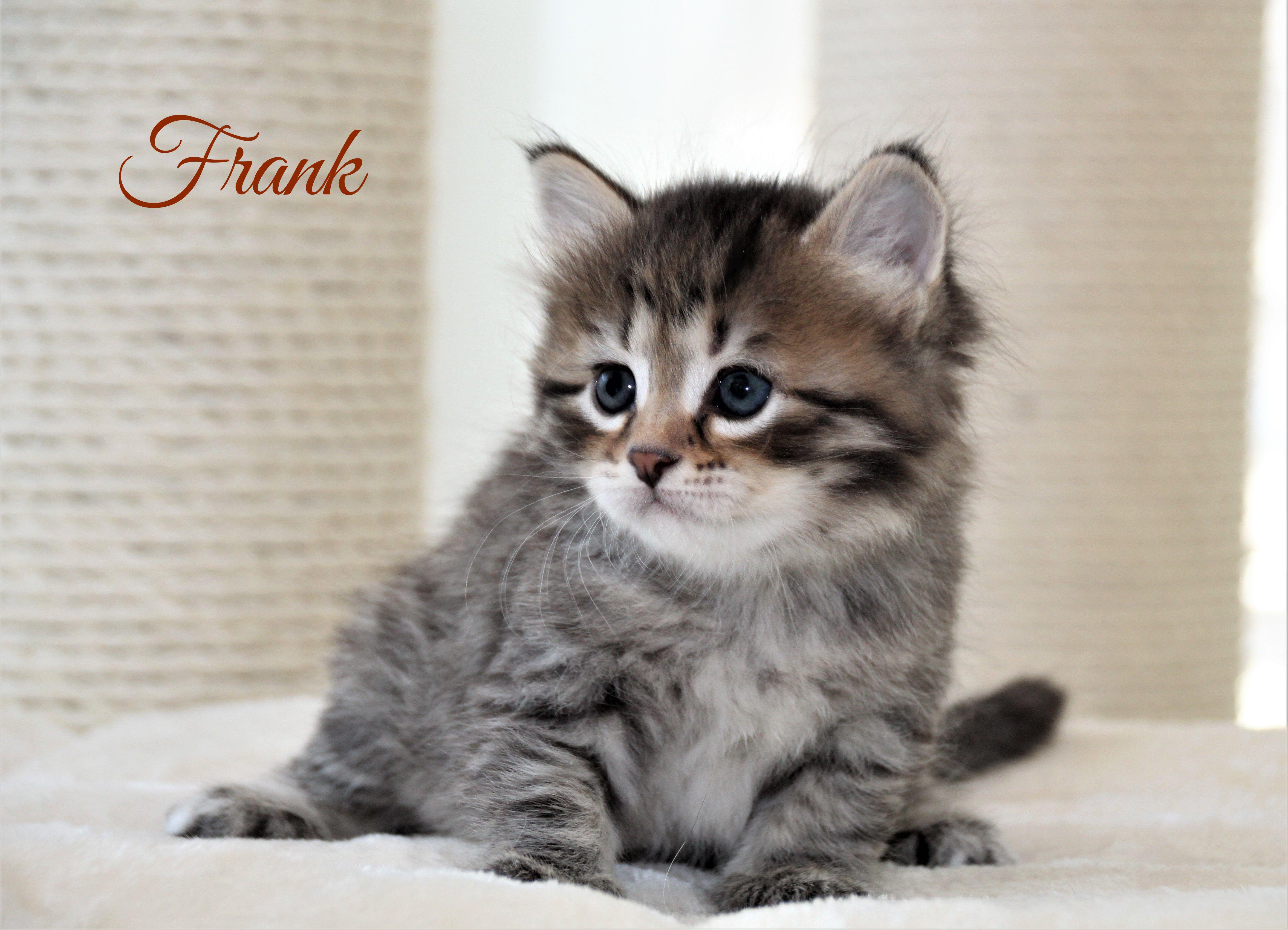 Frank, 1 Monat alt