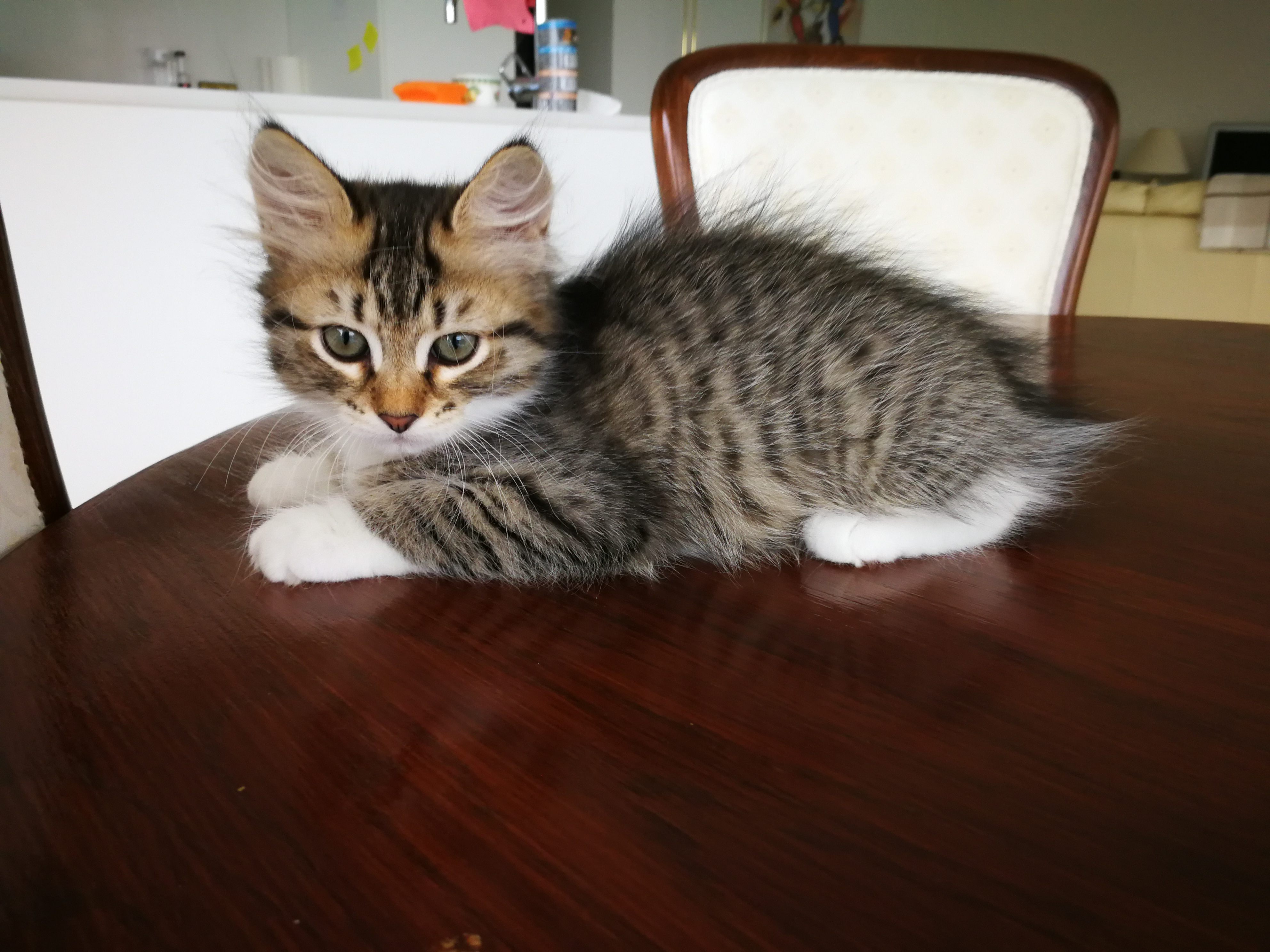 Fortuna, 2 Monate alt
