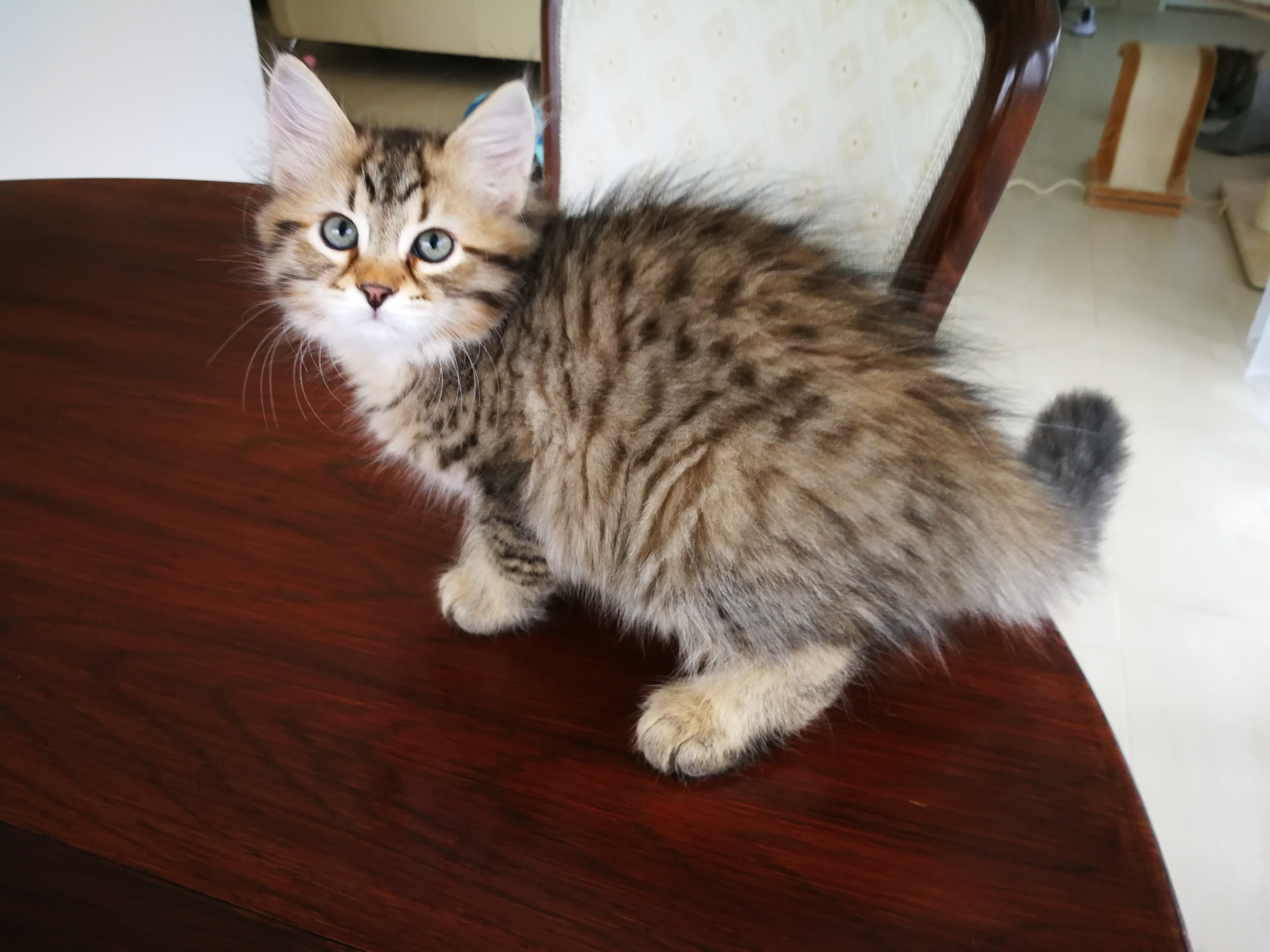 Francois, 2 Monate alt