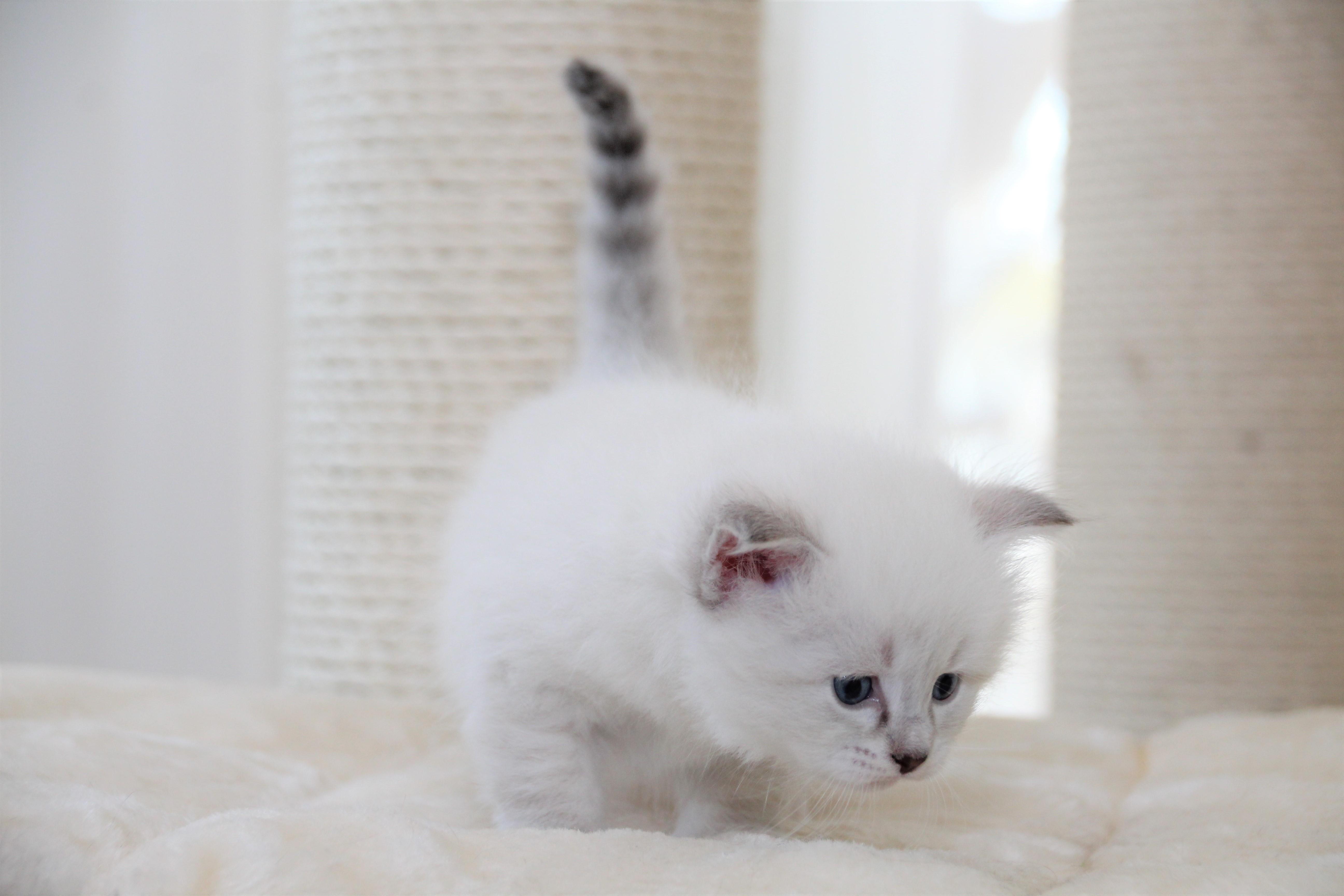 Finn, 1 Monat alt
