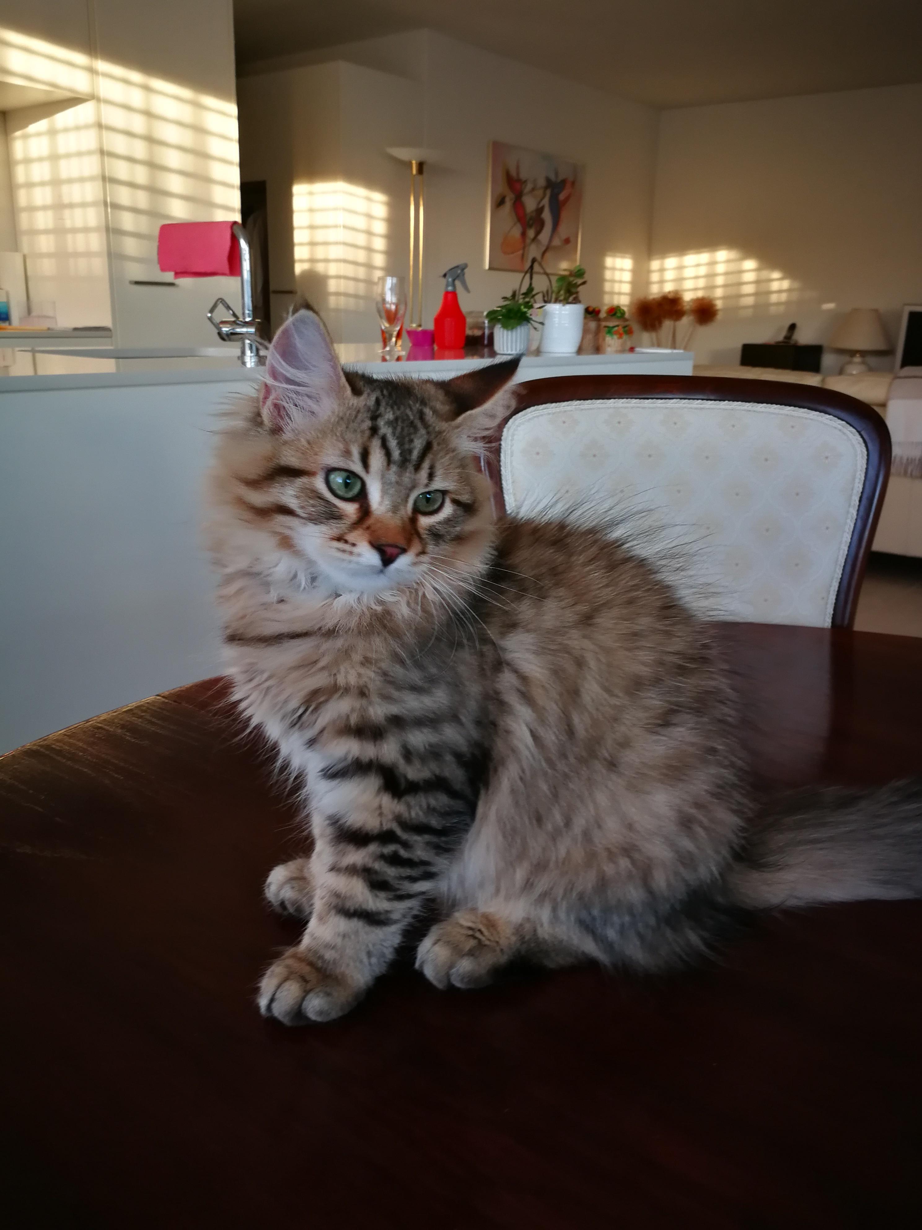 Francois, 3 Monate alt