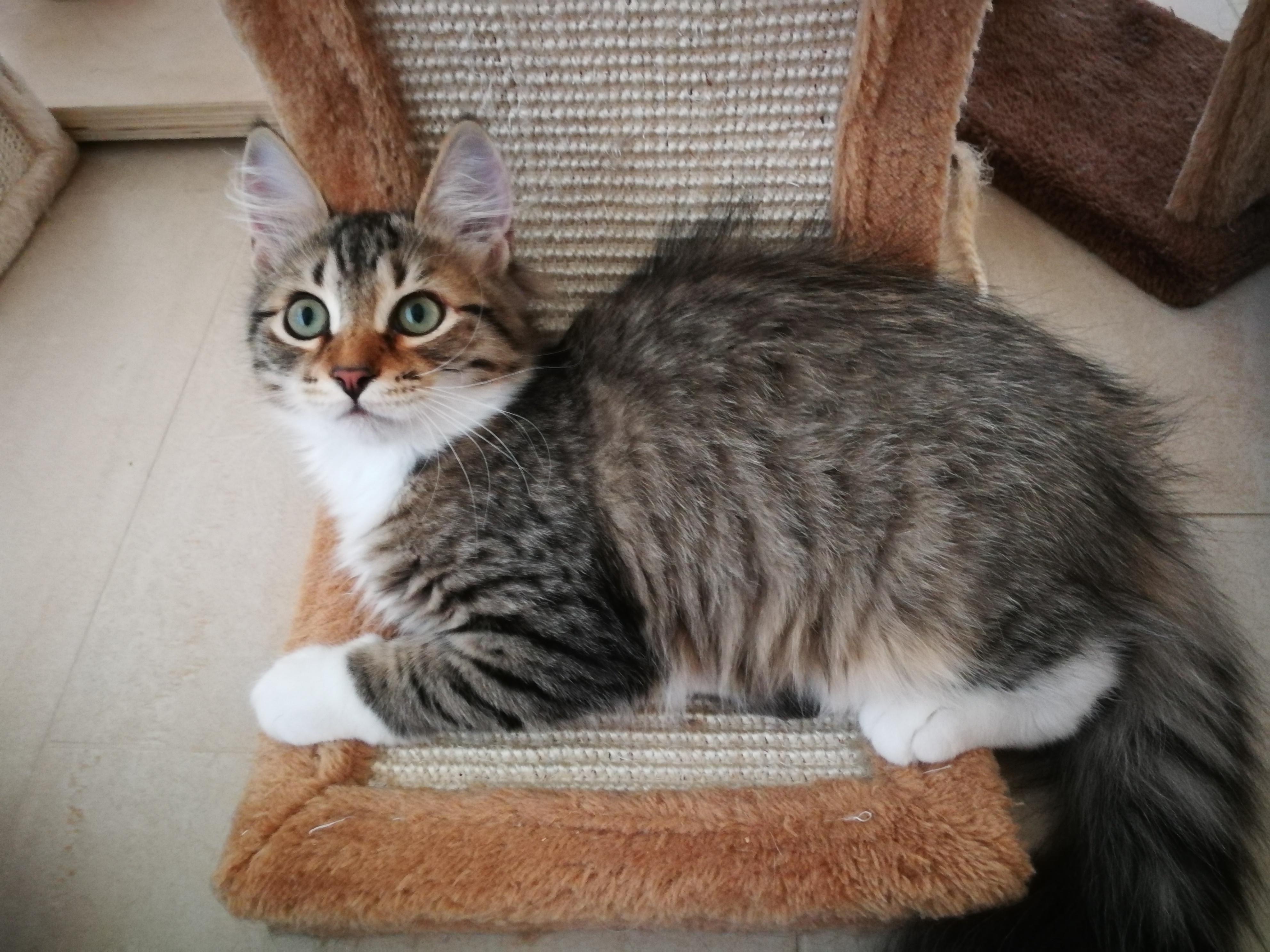 Fortuna, 3 Monate alt