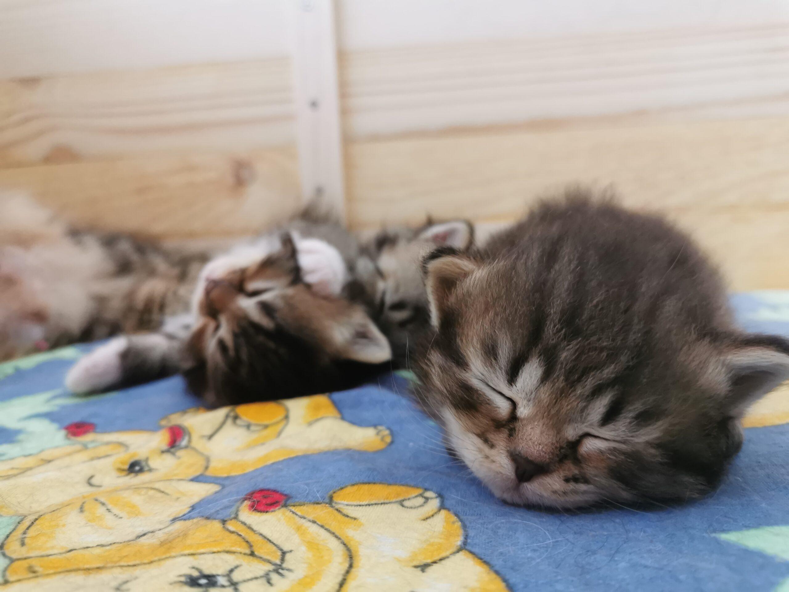 Mittagsschläfchen - Links Grace, Mitte Giulia, Rechts Garfield