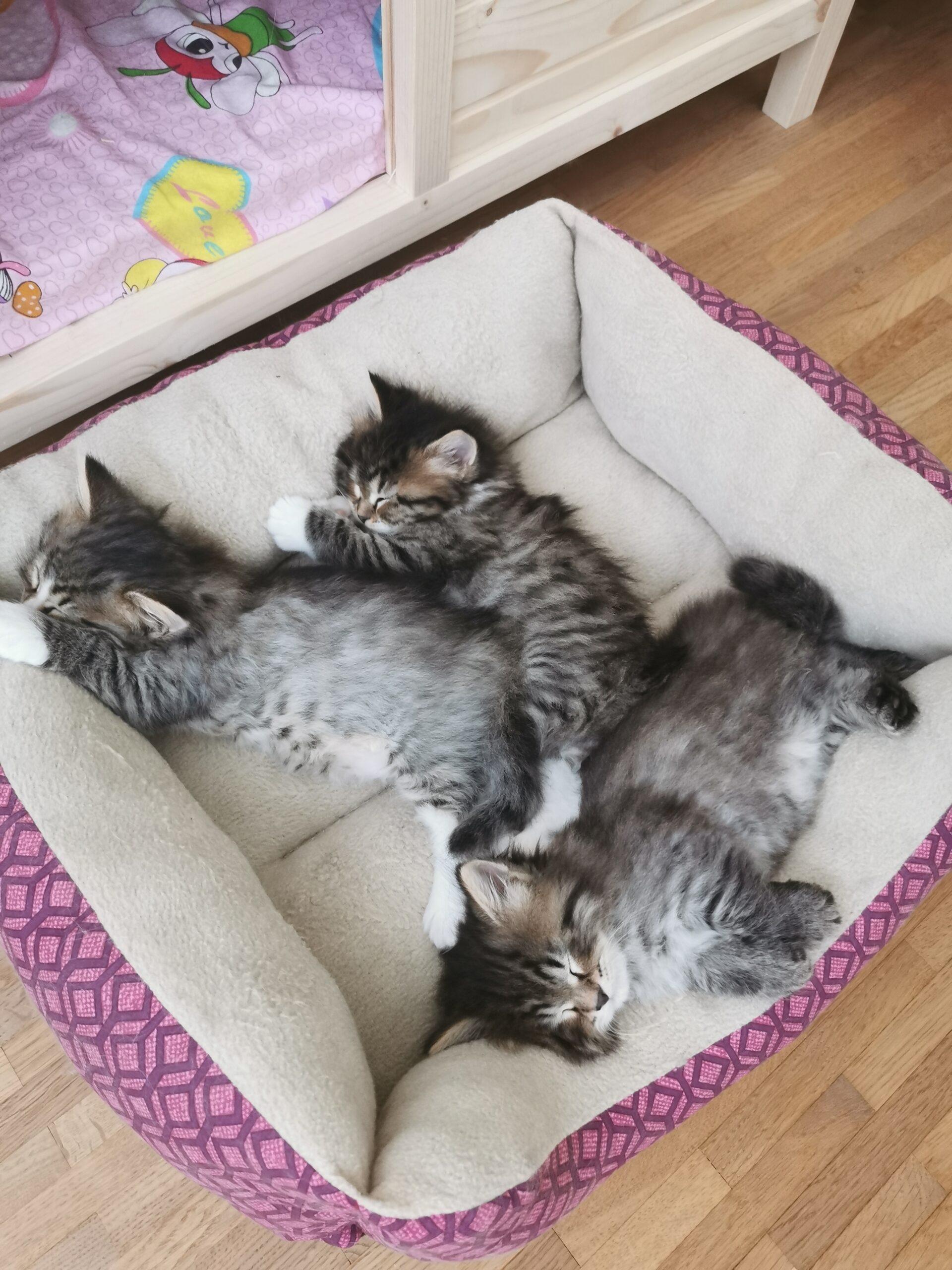 Alle 3 am Mittagsschlaf