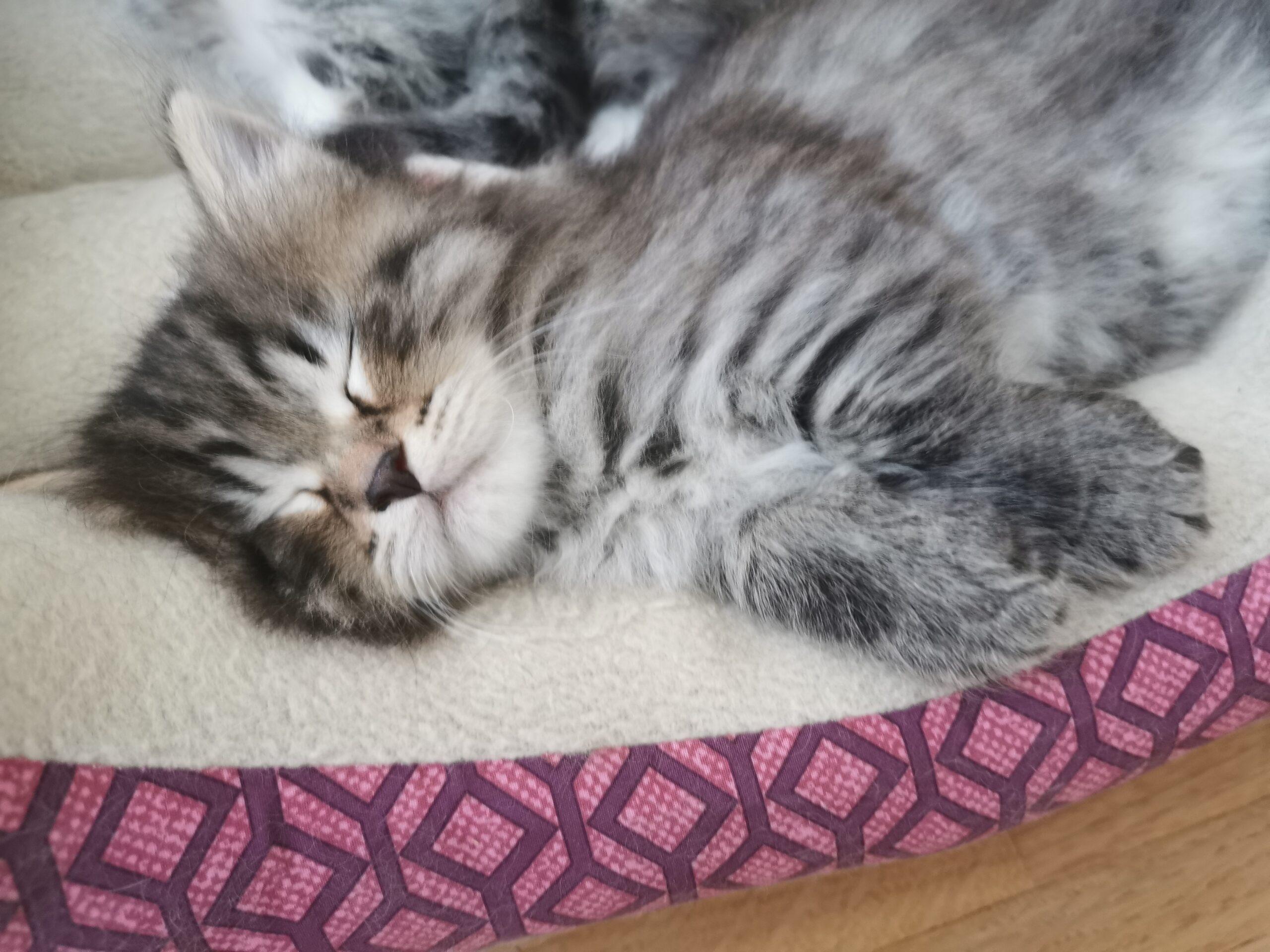 Mittagsschläfchen - Garfield