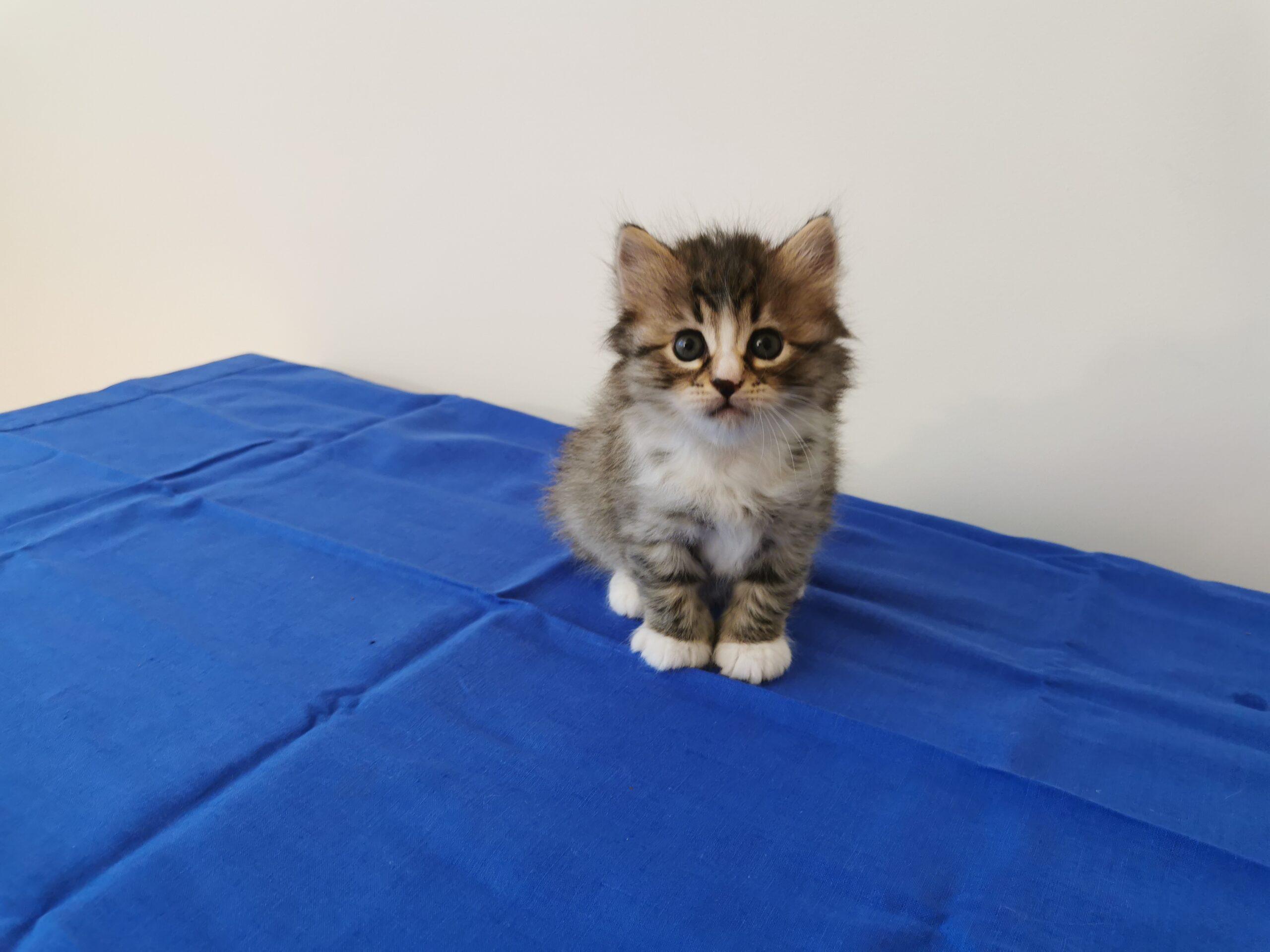 Giulia - 5 Wochen alt