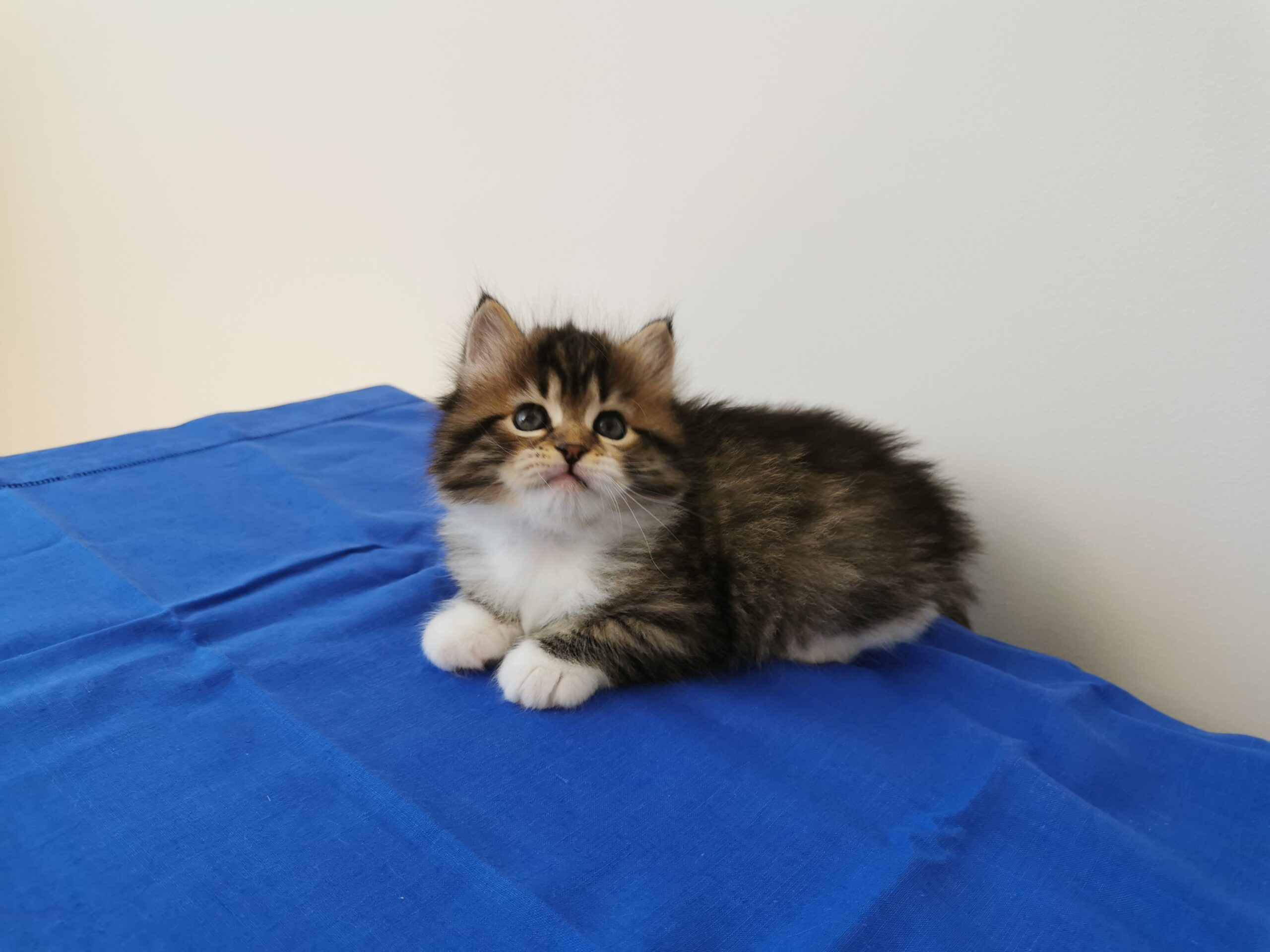 Grace - 5 Wochen alt