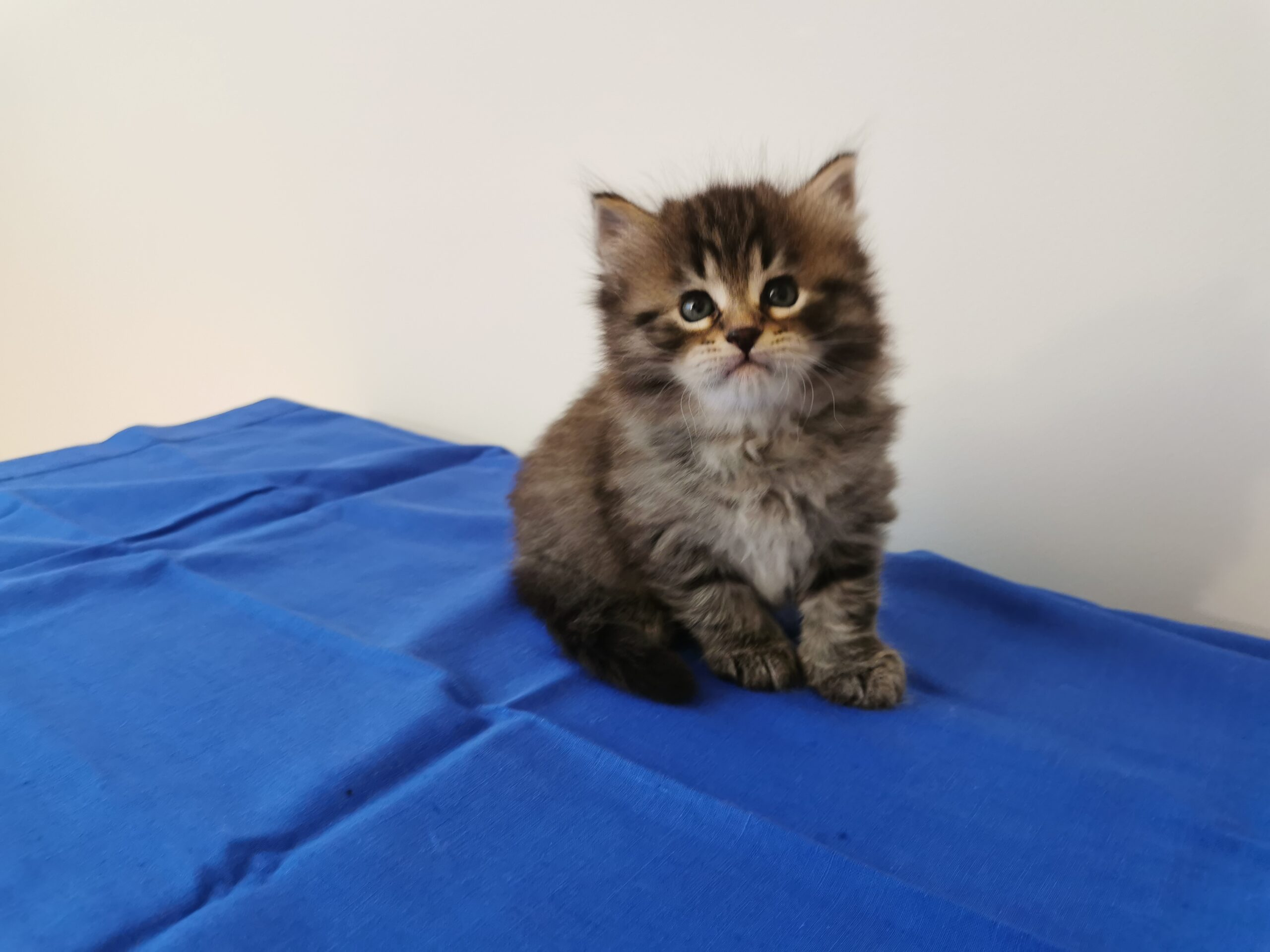 Garfield - 5 Wochen alt